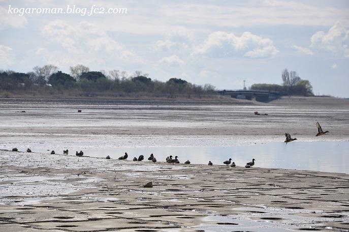 谷中湖は干し上げ期2