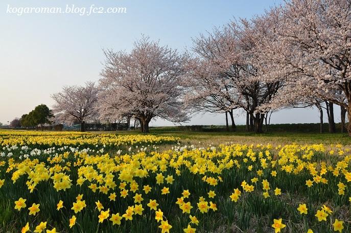 渡良瀬遊水地に咲く花2