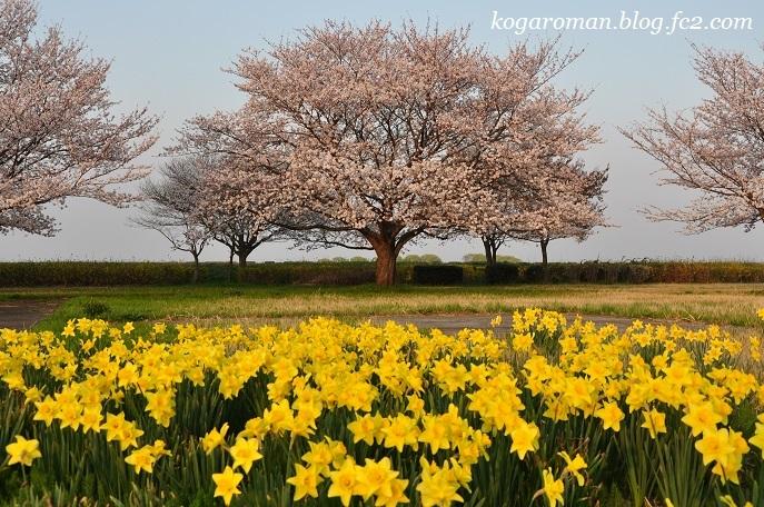 渡良瀬遊水地に咲く花3