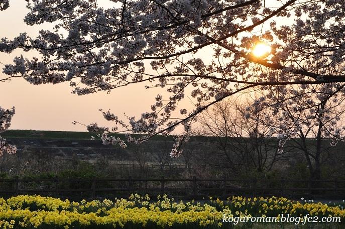 渡良瀬遊水地に咲く花4