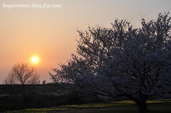 渡良瀬遊水地に咲く花5