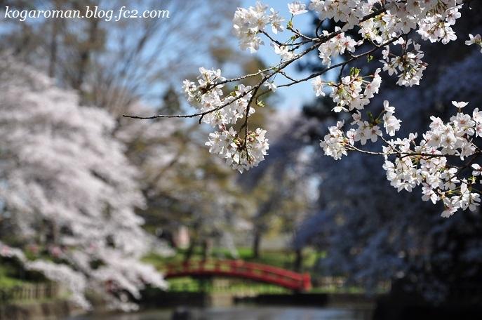 間々田八幡公園の桜3