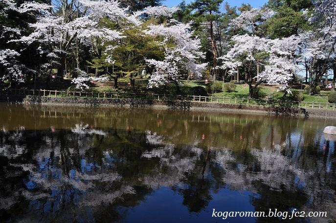間々田八幡公園の桜2