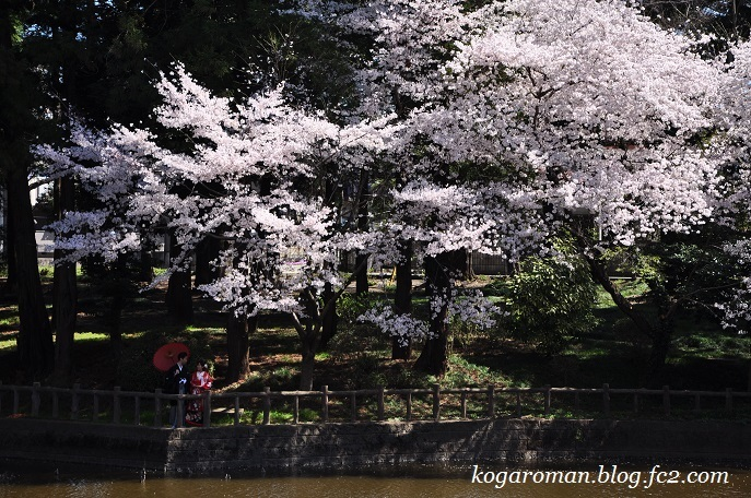 間々田八幡公園の桜4