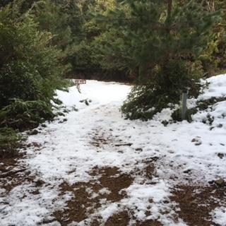 林道前の雪道