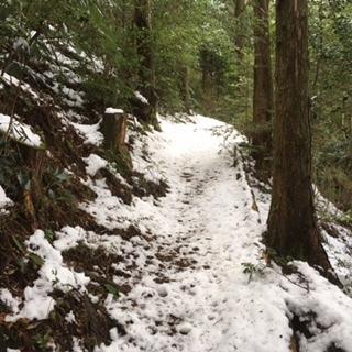 頂上下道の雪道