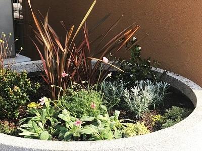 花壇植え込み (1)