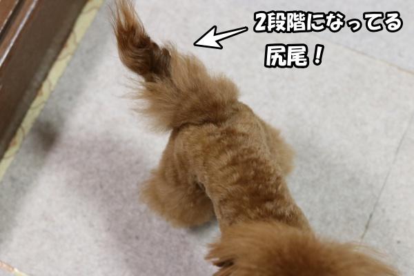 IMG_120820180218マハもゴージャス尻尾?