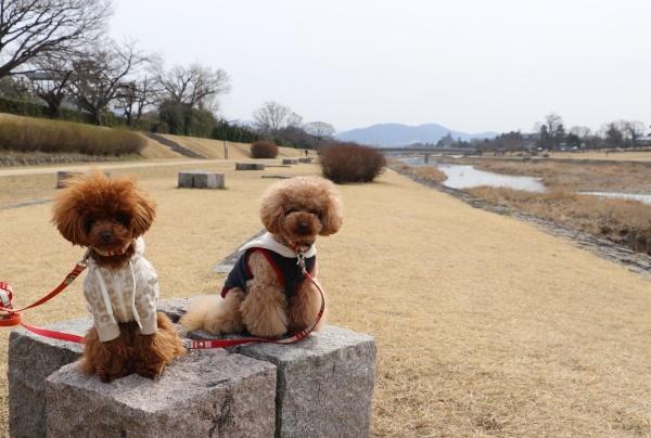 IMG_127420180225鴨川散歩でまた撮るコノマハ