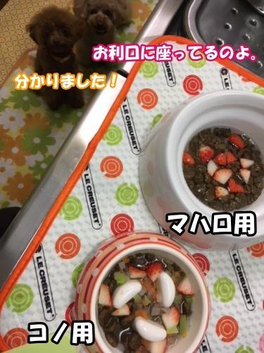 IMG_7232 (003)20180303夜ご飯