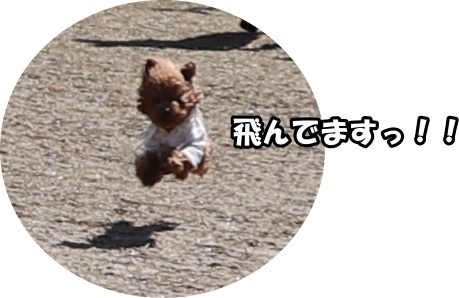 IMG_132820180306枚方東部公園飛行犬マハ1