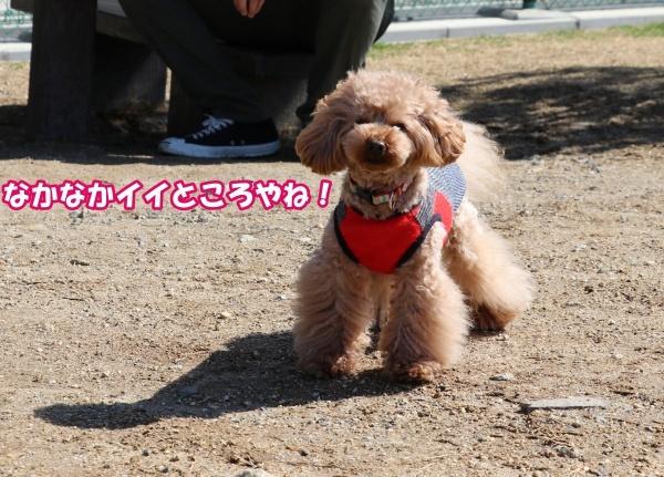 IMG_134020180306枚方東部公園コノたんOKでました!