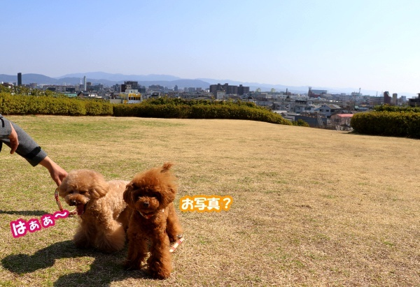 IMG_180120180312西京極散歩芝生広場1
