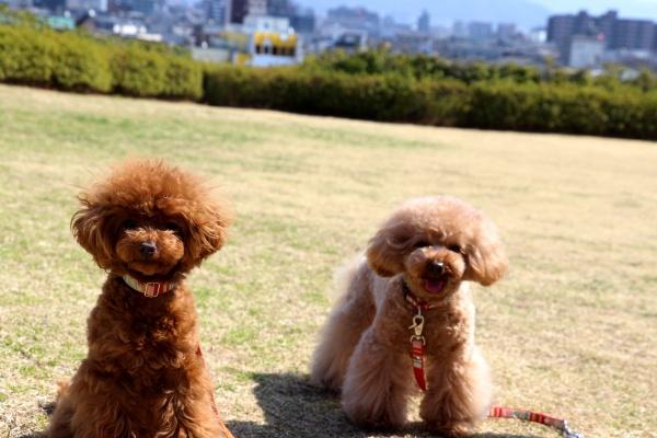 IMG_180220180312西京極散歩芝生広場2