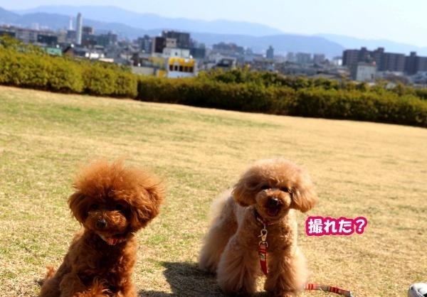 IMG_180320180312西京極散歩芝生広場3