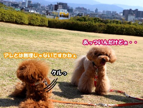 IMG_180420180312西京極散歩芝生広場4