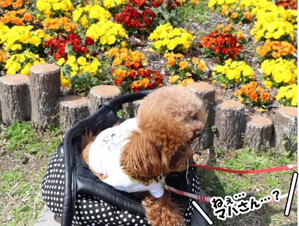 IMG_184320180318鶴見緑地公園で、マハロん?!w