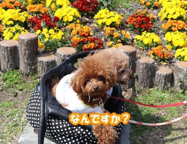 IMG_184420180318鶴見緑地公園で、マハロん?2