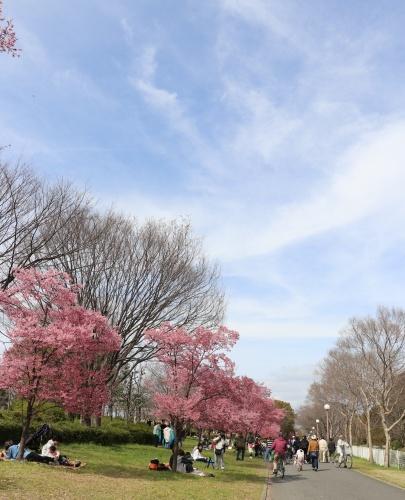 IMG_187120180318鶴見緑地公園の桜2