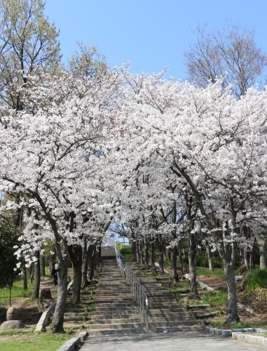 IMG_205020180327鶴見緑地のソメイヨシノ写真スポット♪