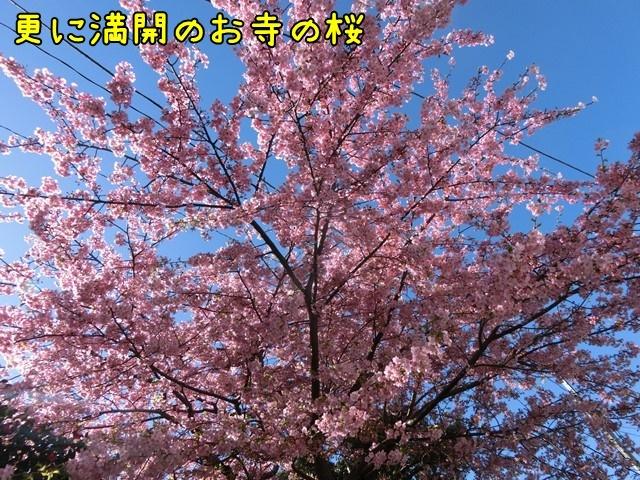 c-CIMG7014.jpg