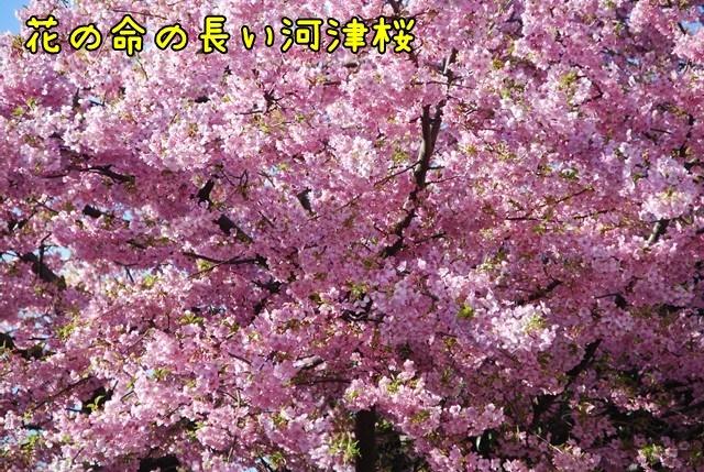 c-DSC_5586.jpg