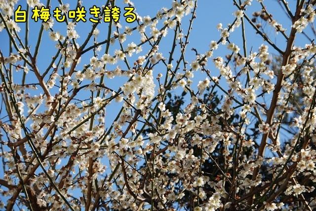c-DSC_5588.jpg