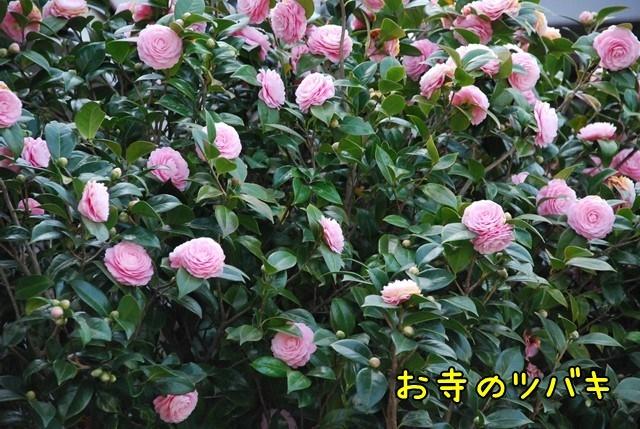 c-DSC_5683.jpg