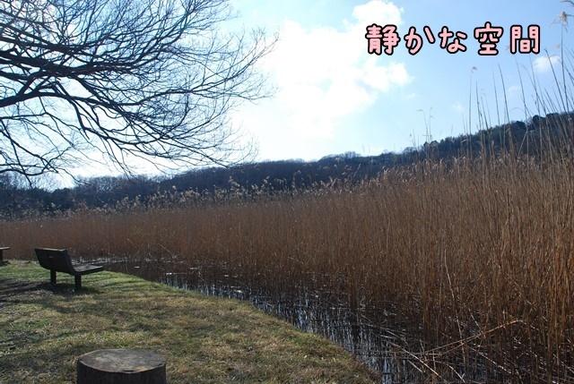 c-DSC_5746.jpg