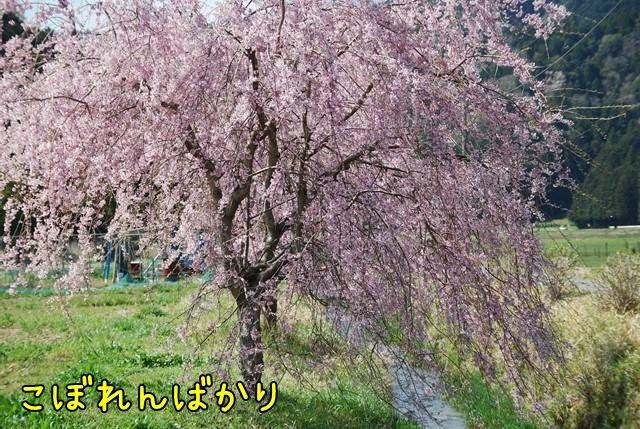 c-DSC_5809.jpg