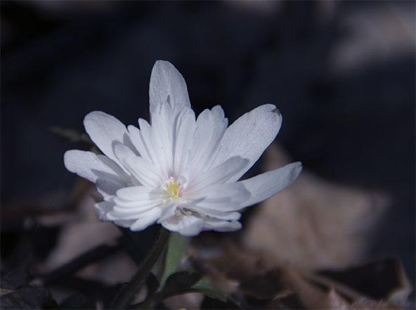 180328-98.jpg