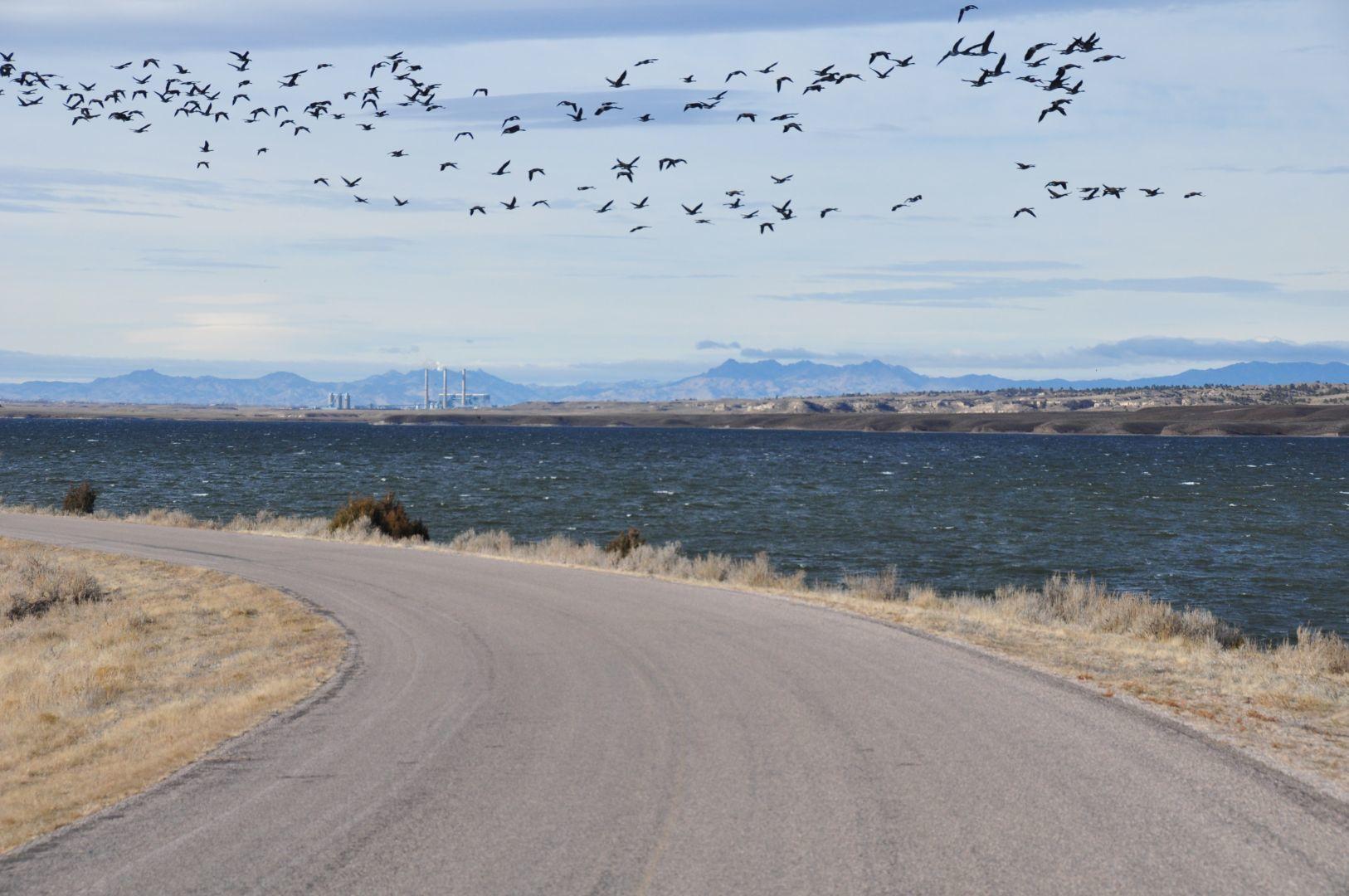 migrated birds