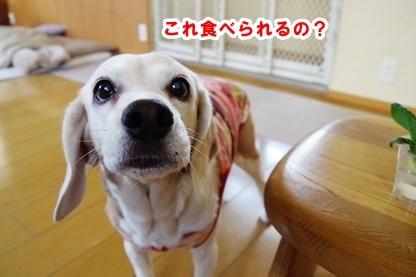 小松菜 3