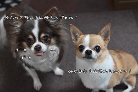 DSC10260226.jpg