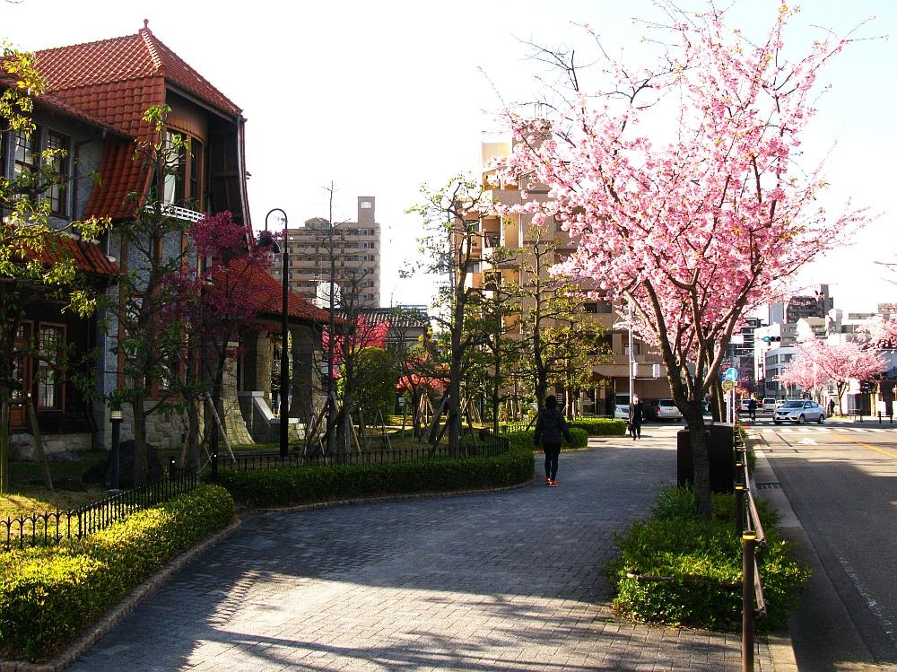2018_03_23 名古屋市東区泉:大寒桜の並木道10A