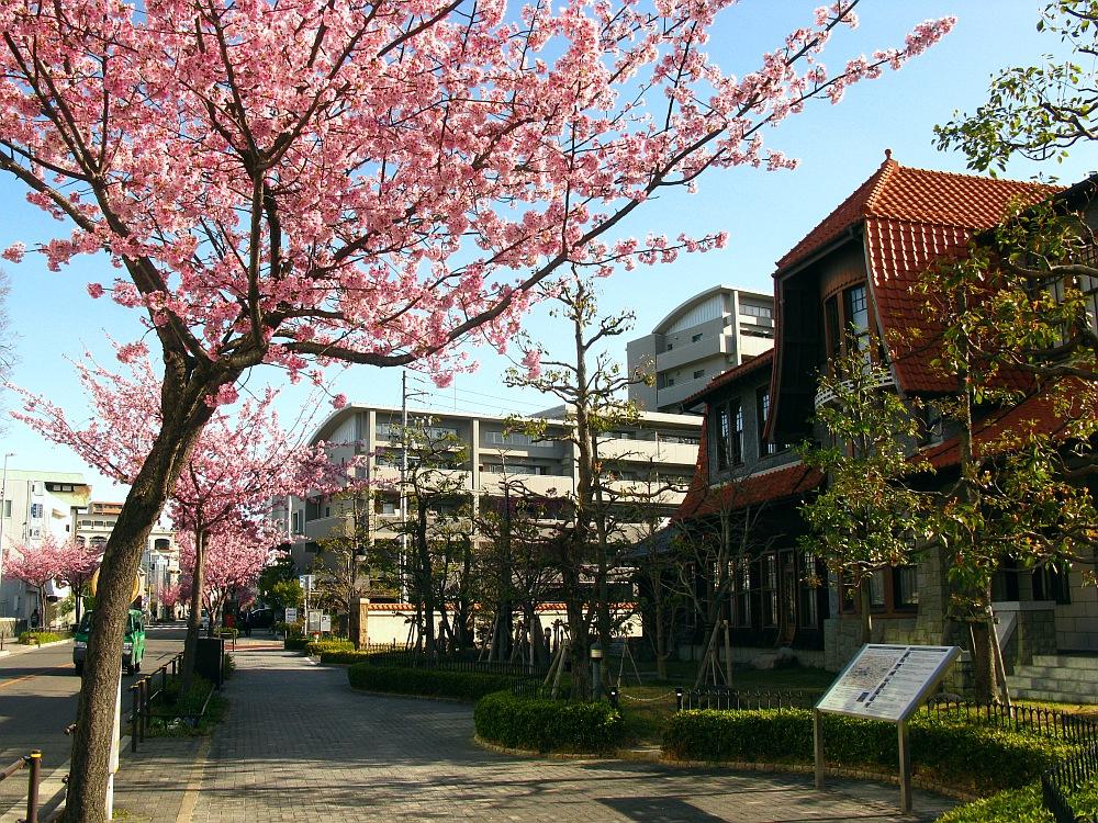 2018_03_23 名古屋市東区泉:大寒桜の並木道11