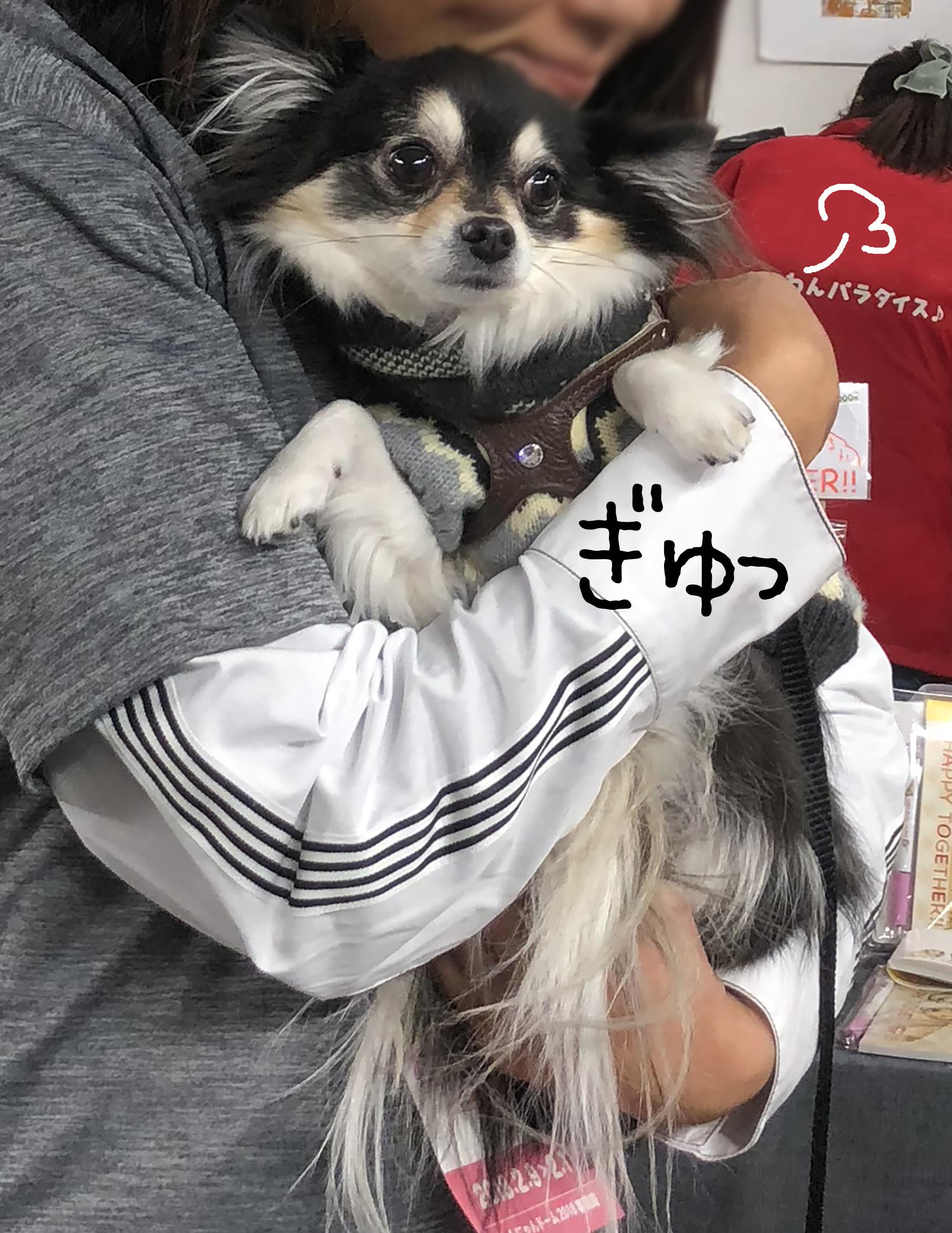 1802ゆうさんとタヌキ02_2