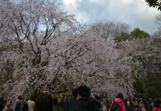 180323-164220-2018桜祭り (454)_R