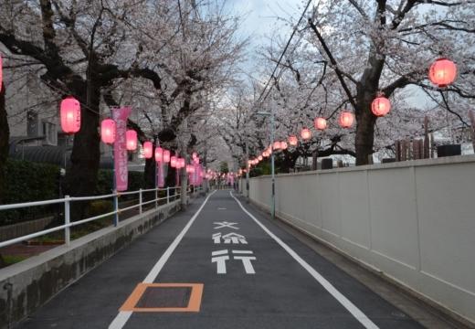 180323-170354-2018桜祭り (495)_R