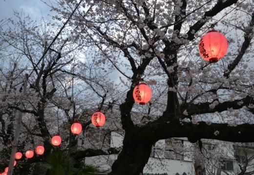 180323-170415-2018桜祭り (496)_R