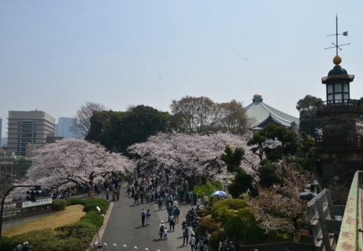 180327-112056-桜の街 もう一度訪ねたい20180327 (57)_R