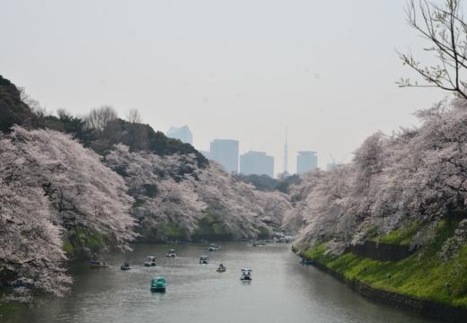 180327-112444-桜の街 もう一度訪ねたい20180327 (75)_R
