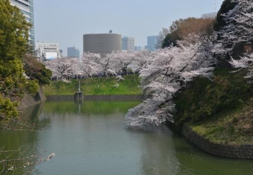 180327-112753-桜の街 もう一度訪ねたい20180327 (84)_R