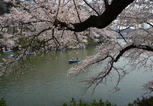 180327-114006-桜の街 もう一度訪ねたい20180327 (116)_R
