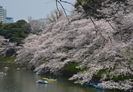 180327-114258-桜の街 もう一度訪ねたい20180327 (132)_R