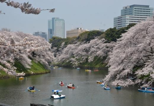 180327-114505-桜の街 もう一度訪ねたい20180327 (137)_R