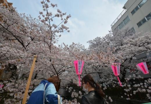180327-132634-桜の街 もう一度訪ねたい20180327 (267)_R