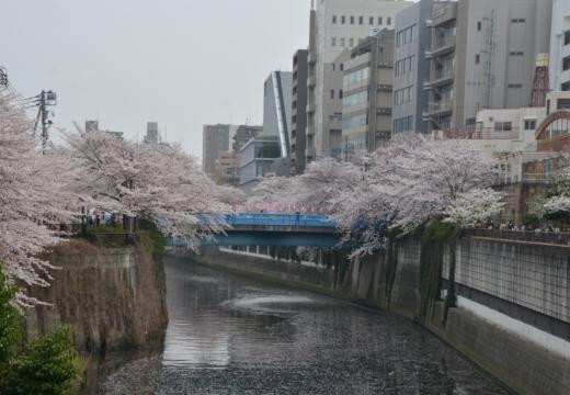 180327-135127-桜の街 もう一度訪ねたい20180327 (299)_R