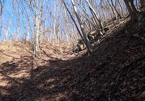 fatwood013.jpg