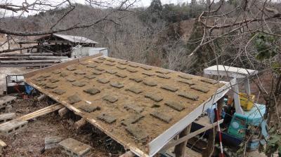 屋根に芝を貼る